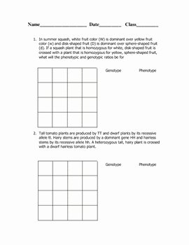 Dihybrid Cross Worksheet Answers Awesome Dihybrid Cross Worksheet by Goby S Lessons