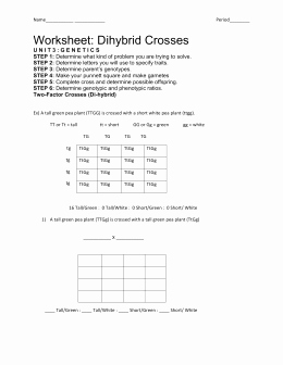 Dihybrid Cross Worksheet Answers Beautiful Answer Key