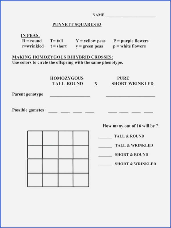 Dihybrid Cross Worksheet Answers Beautiful Chapter 10 Dihybrid Cross Worksheet Answer Key