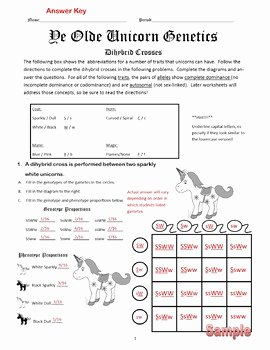 Dihybrid Cross Worksheet Answers Beautiful Dihybrid Crosses F1 Dihybrid Cross Worksheet by Cynthia