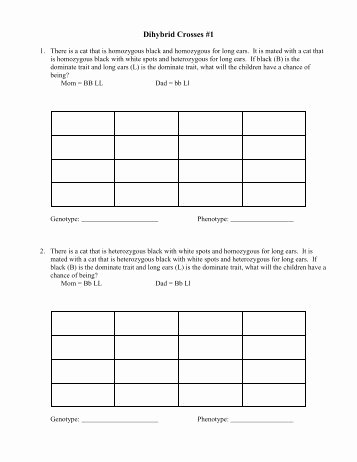 Dihybrid Cross Worksheet Answers Beautiful Dihybrid Practice Worksheet