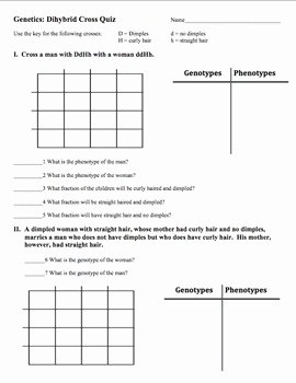Dihybrid Cross Worksheet Answers Beautiful Genetics Dihybrid Quiz by Amy Brown Science