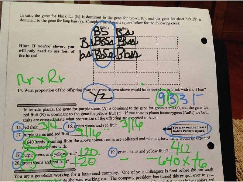 Dihybrid Cross Worksheet Answers Fresh Mrs Stein S 7th Period Sts Biology whose Scribin Friday