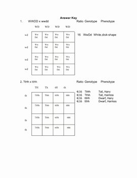 Dihybrid Cross Worksheet Answers Inspirational Dihybrid Cross Worksheet by Goby S Lessons