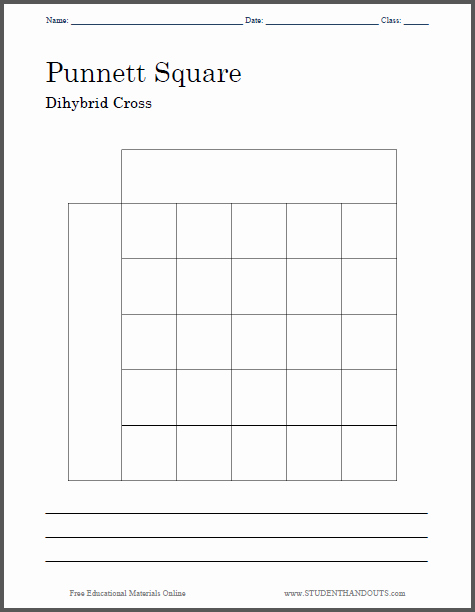 Dihybrid Cross Worksheet Answers Luxury Punnett Square Dihybrid Cross Worksheet Free to Print
