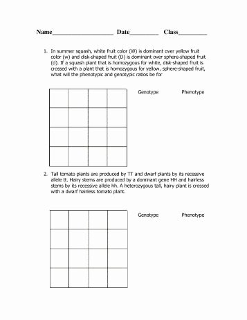 Dihybrid Cross Worksheet Answers Luxury Worksheet Dihybrid Crosses Triton Science