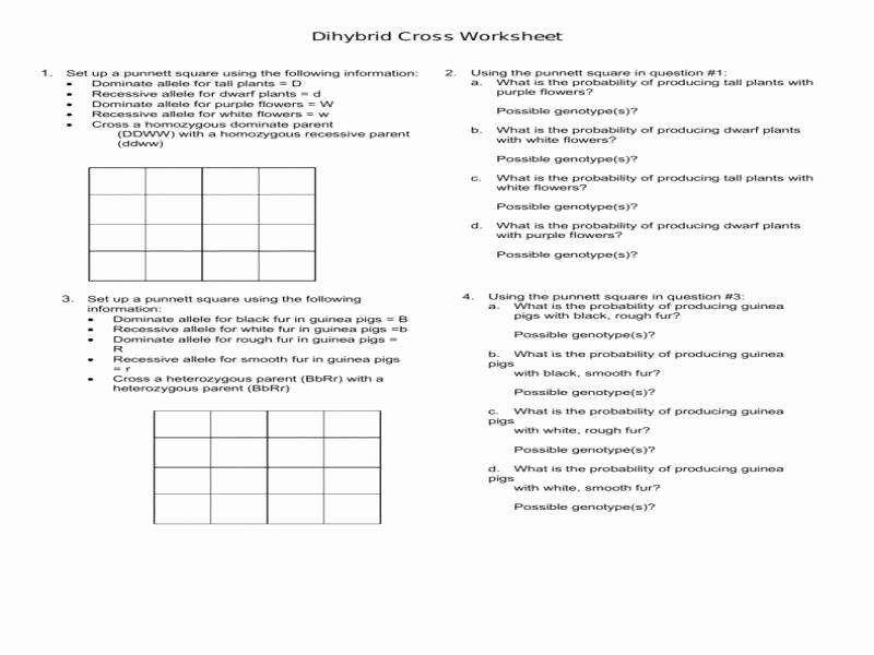 Dihybrid Cross Worksheet Answers New Dihybrid Cross Worksheet Answers