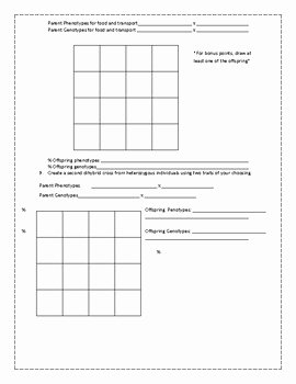 Dihybrid Cross Worksheet Answers Unique Dihybrid Cross Punnett Practice Worksheet by Science with