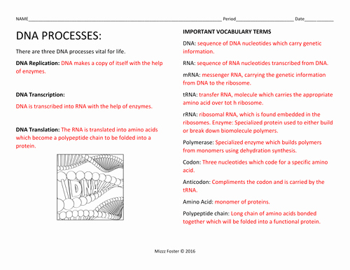Dna and Replication Worksheet New Dna Processes Dna Replication and Protein Synthesis