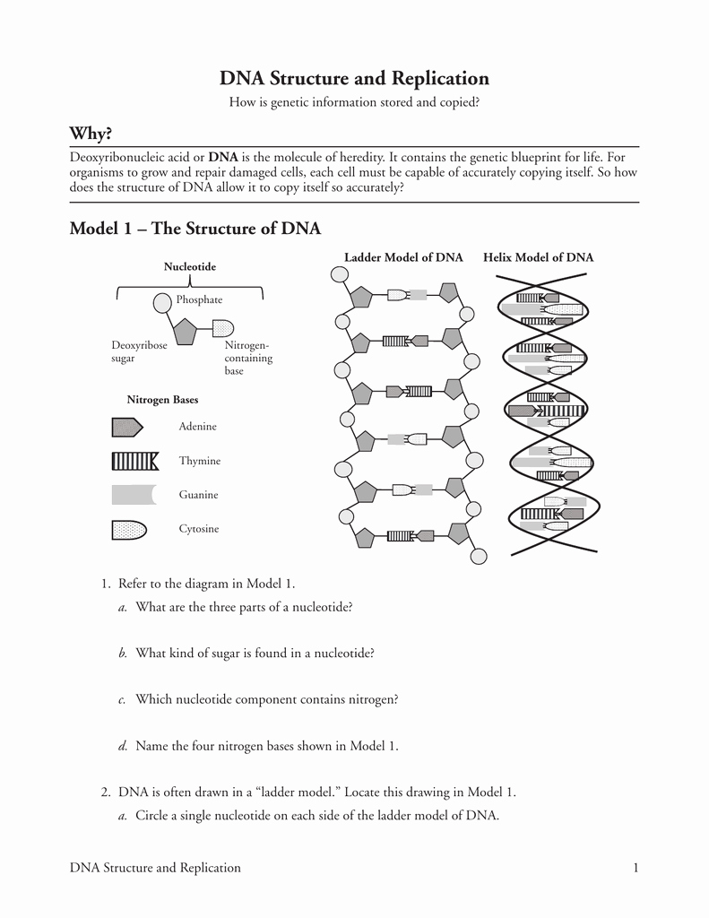 Dna and Replication Worksheet New How Can You order A Ladder Worksheet Answer Key