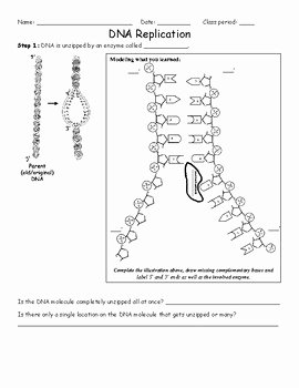 Dna and Replication Worksheet Unique Dna Replication Worksheet by Activelearning