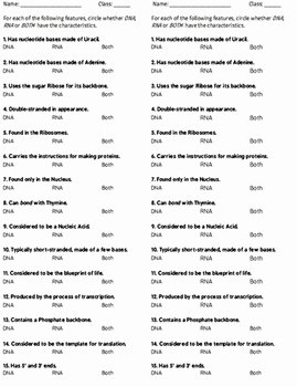 Dna and Rna Worksheet Answers Beautiful Warmup Quiz Mini assignment Dna Rna or Both Two Versions