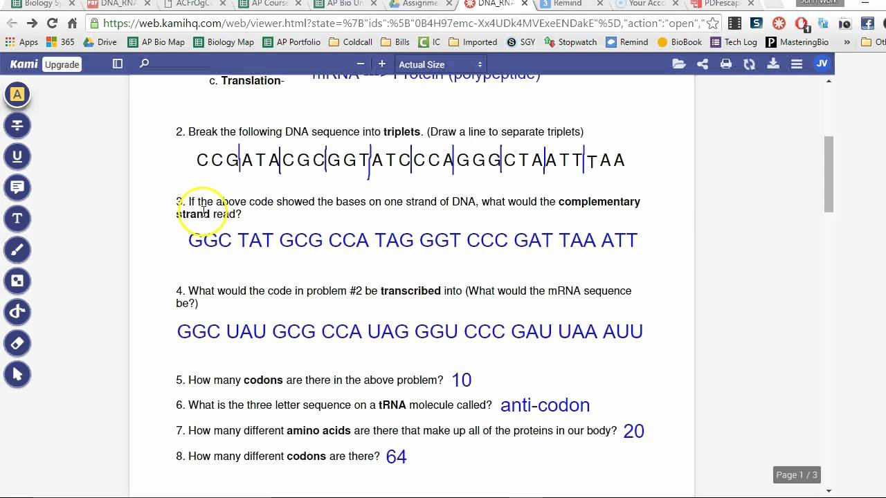Dna and Rna Worksheet Answers Best Of Worksheet Dna Rna and Protein Synthesis Answer