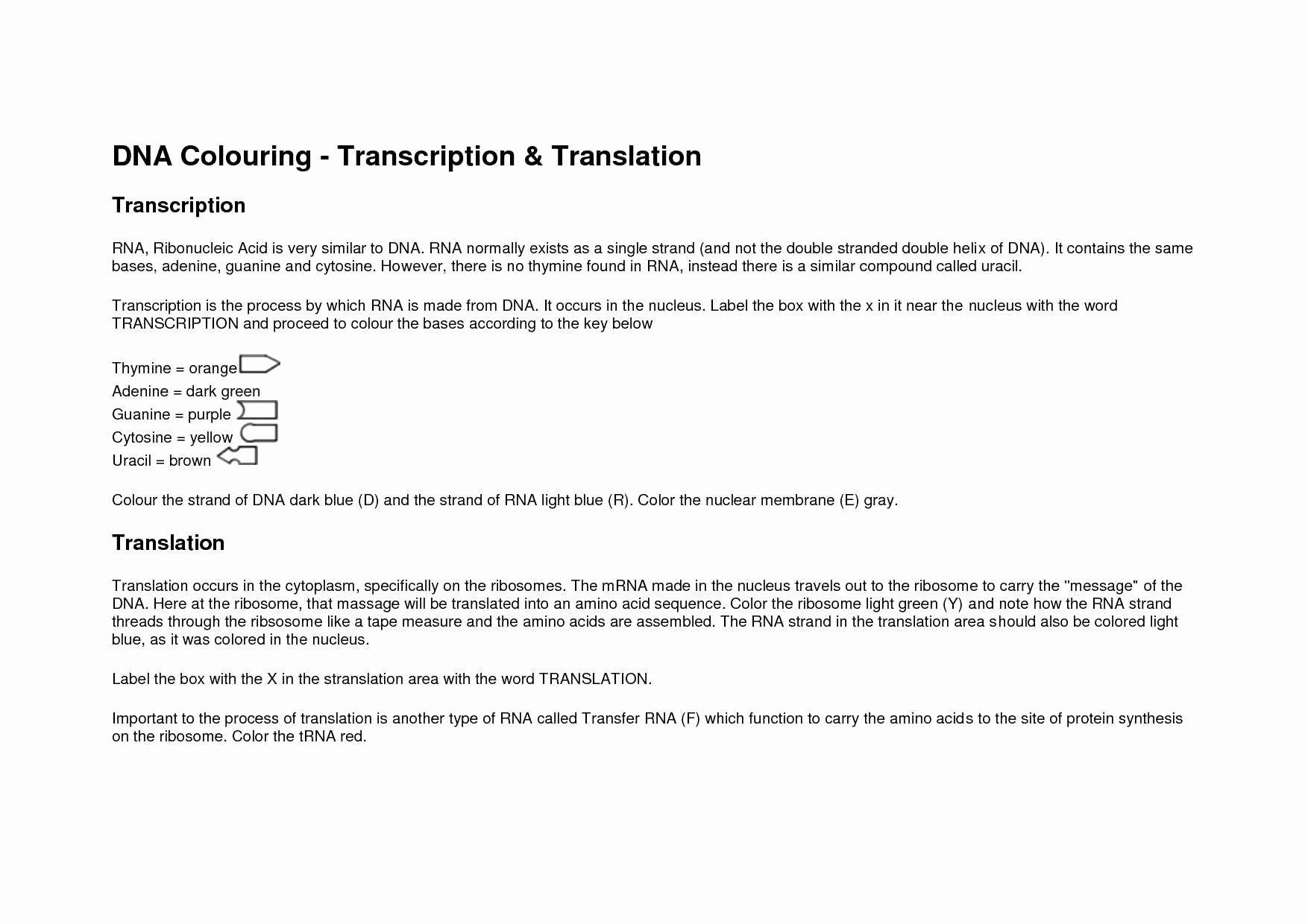 Dna and Rna Worksheet Answers Fresh Dna Rna and Protein Synthesis Worksheet Answer Key