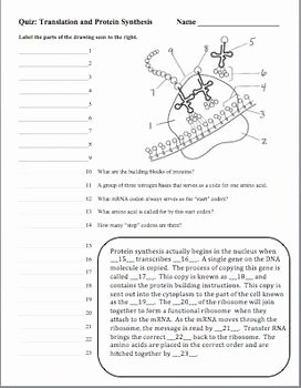 Dna and Rna Worksheet Awesome Pinterest • the World's Catalog Of Ideas