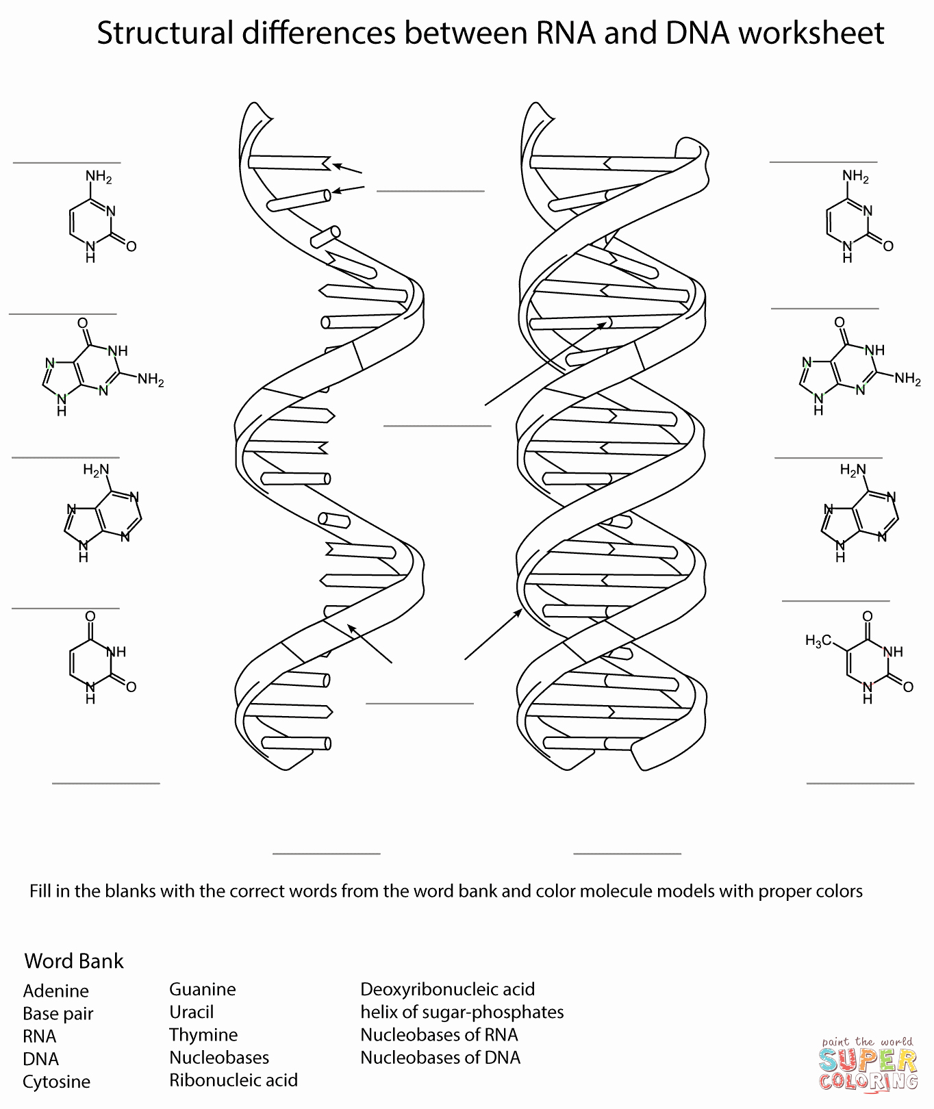 Dna and Rna Worksheet Beautiful Rna and Dna Worksheet Coloring Page