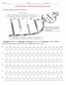 Dna Base Pairing Worksheet Answers Awesome Dna Base Pairing Activity by Earth Life source