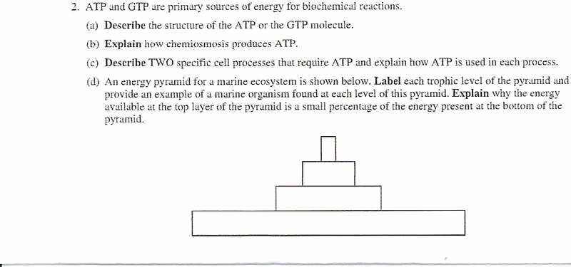 Dna Base Pairing Worksheet Answers Best Of Dna Base Pairing Worksheet