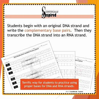 Dna Base Pairing Worksheet Answers Inspirational Dna Base Pairing Worksheet