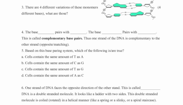 Dna Base Pairing Worksheet Answers Lovely Simple Decoding Dna Worksheet High School Answers Learning
