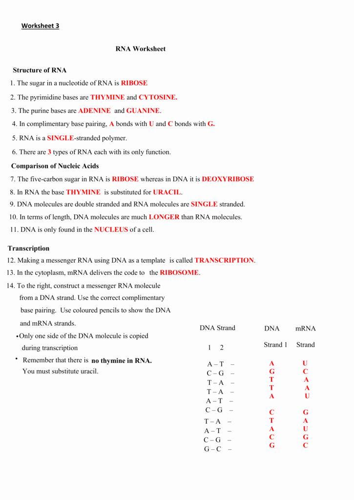 Dna Base Pairing Worksheet Answers Lovely Worksheet 3 the Nsa at Work