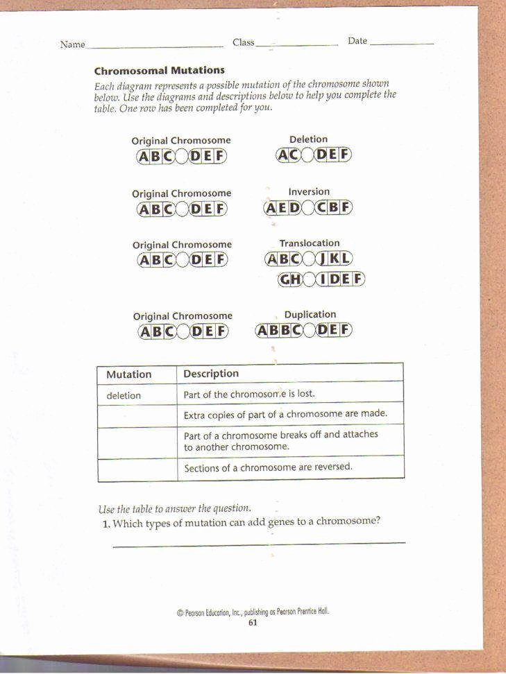 Dna Base Pairing Worksheet Answers New Dna Base Pairing Worksheet