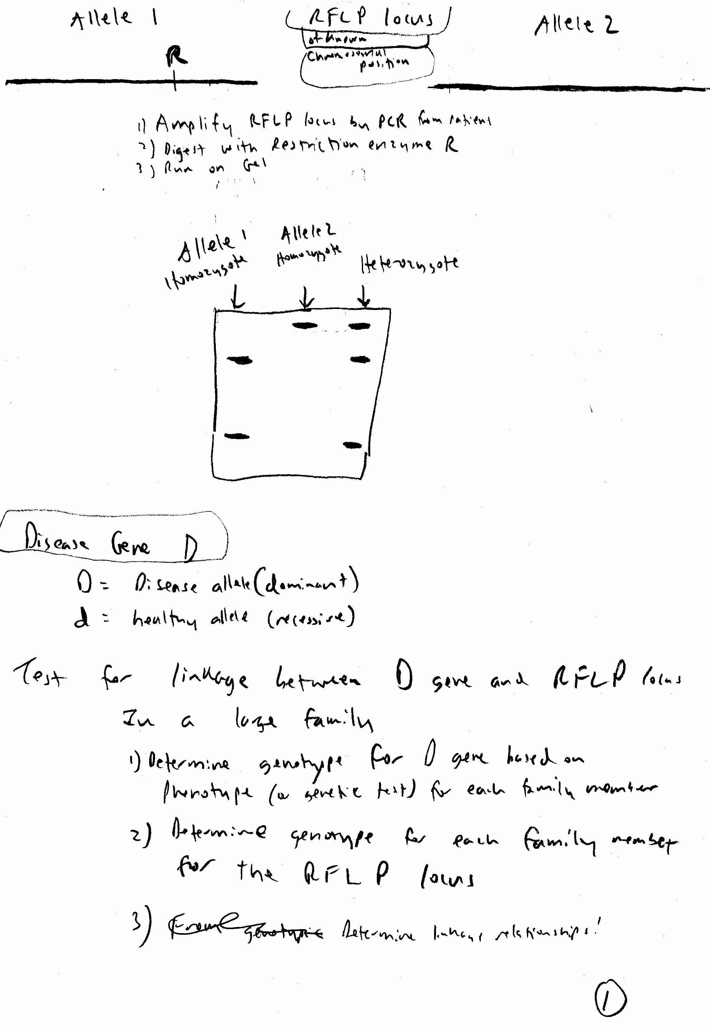 Dna Base Pairing Worksheet Awesome Dna Base Pairing Worksheet Answer Key Worksheet Idea