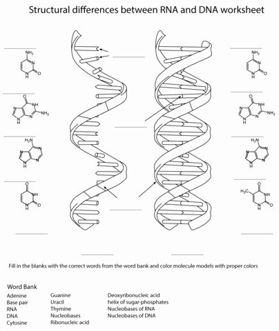 Dna Base Pairing Worksheet Beautiful Dna Base Pairing Worksheet