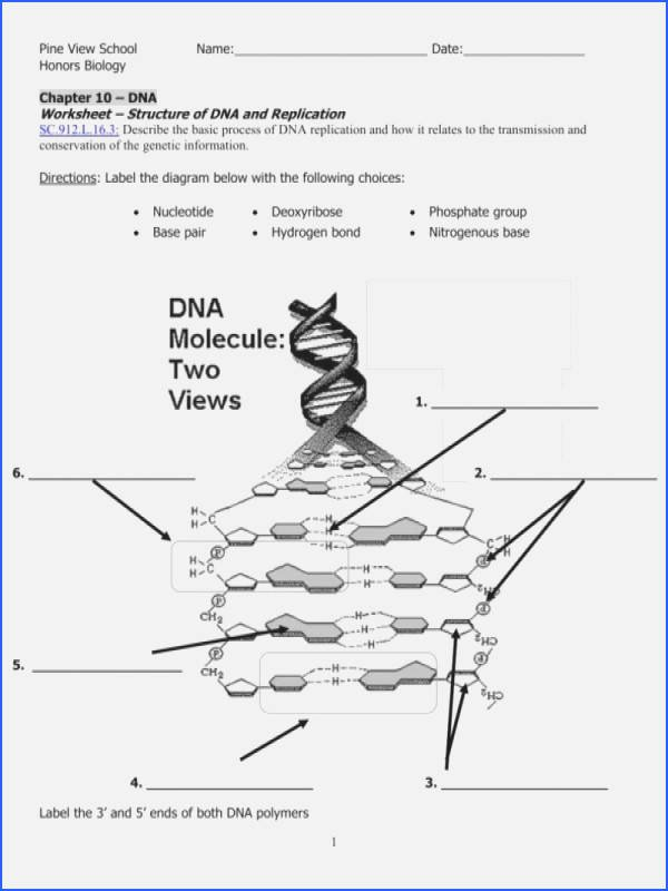 Dna Base Pairing Worksheet Best Of Dna the Molecule Heredity Worksheet