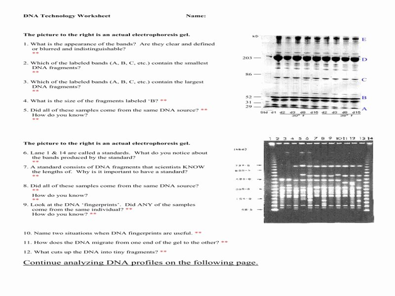 Dna Fingerprinting Worksheet Answers Awesome 1 Cbc4da6c5f666d7a Ea1f4d4939 Free