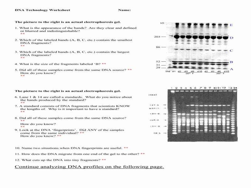 Dna Fingerprinting Worksheet Answers Elegant Dna Fingerprinting Worksheet