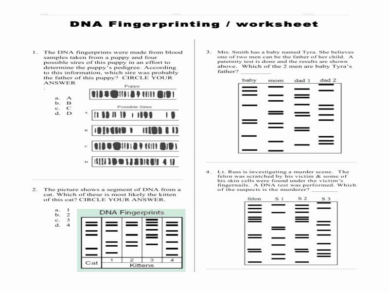 Dna Fingerprinting Worksheet Answers Unique Dna Fingerprinting Worksheet Answers Free Printable