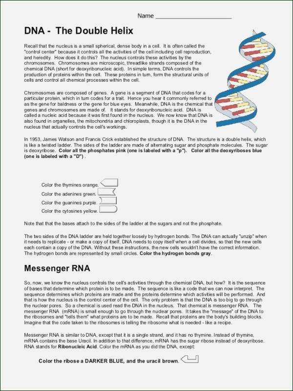 Dna Mutation Practice Worksheet Answers Fresh Dna Mutations Practice Worksheet Answers