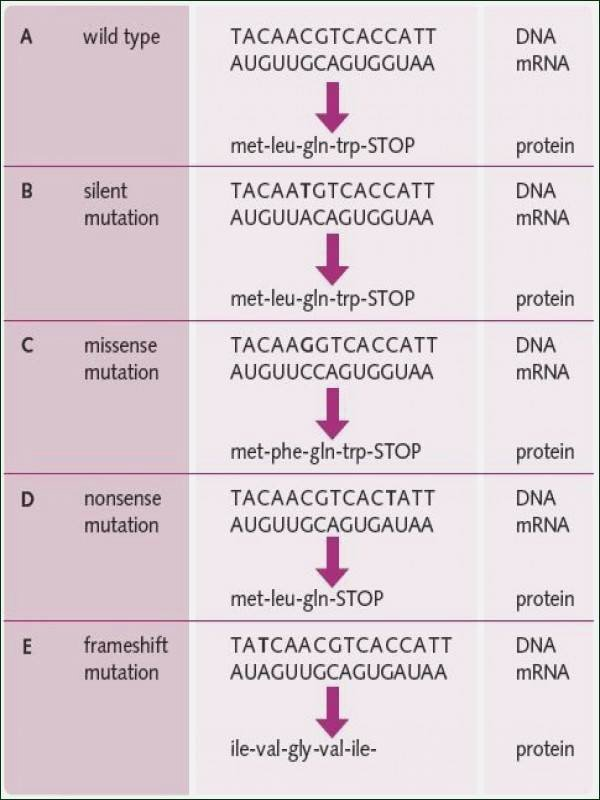 Dna Mutations Practice Worksheet Answer Fresh Dna Mutations Practice Worksheet Answers