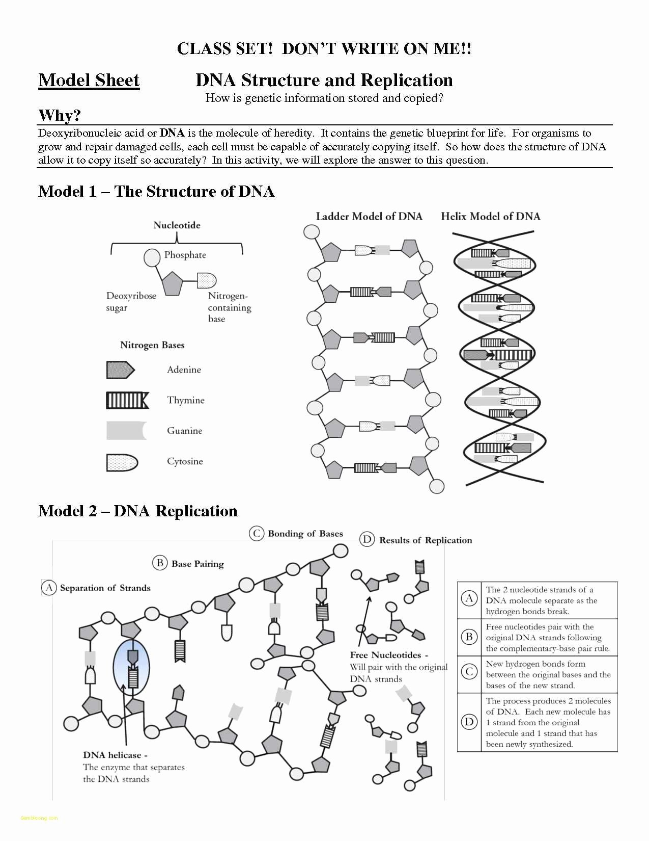 Dna Mutations Practice Worksheet Answers Lovely Dna Mutations Practice Worksheet Worksheet Idea Template