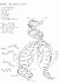 Dna Replication Coloring Worksheet Awesome 16 Best Of Good Citizen Worksheets social Stu S