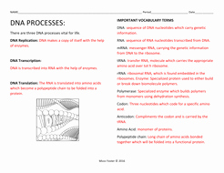 Dna Replication Coloring Worksheet Awesome Dna Processes Dna Replication and Protein Synthesis