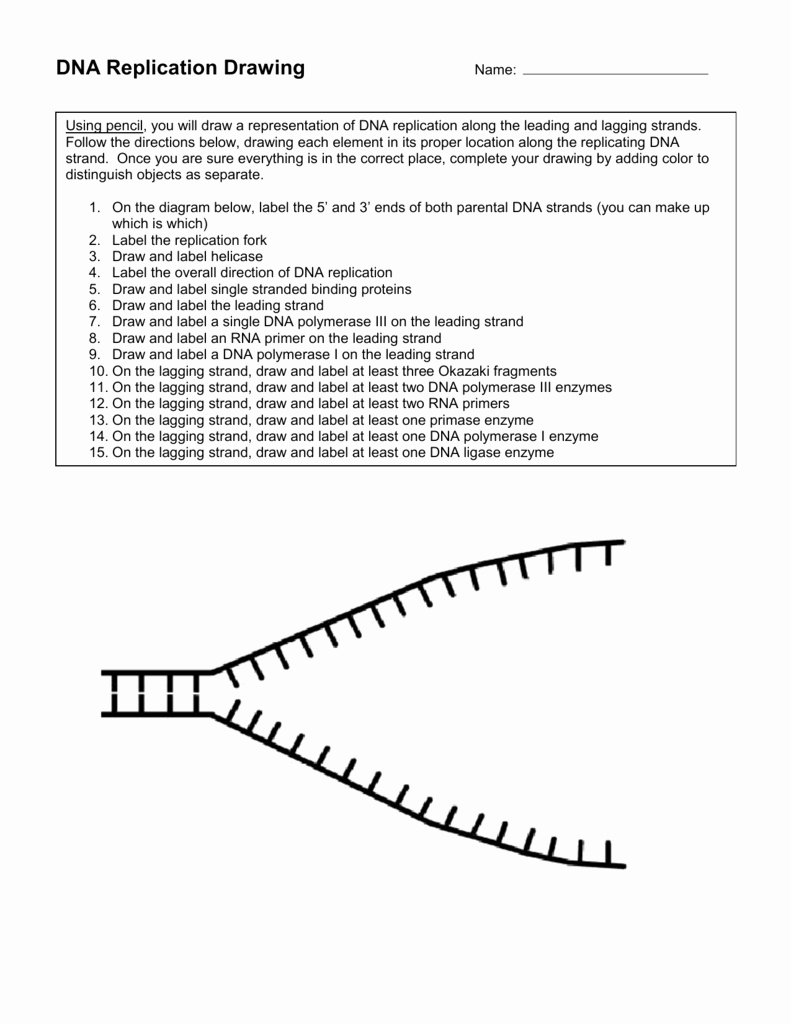 Dna Replication Coloring Worksheet Awesome Dna Rna Replication Worksheet the Best Worksheets Image