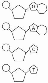 Dna Replication Coloring Worksheet Elegant Dna the Double Helix Coloring Worksheet