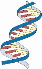Dna Replication Coloring Worksheet Lovely Worksheets and Dna On Pinterest