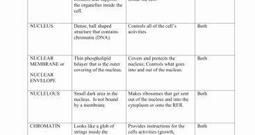 Dna Replication Coloring Worksheet New Dna Structure and Replication Review Worksheet