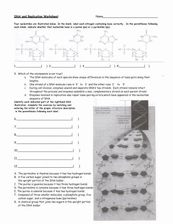Dna Replication Review Worksheet Awesome Unit 4 Periodicity Review Worksheet Answer Key solon