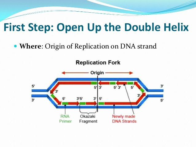 Dna Replication Review Worksheet Beautiful Dna Replication Review for Matching Worksheet Final