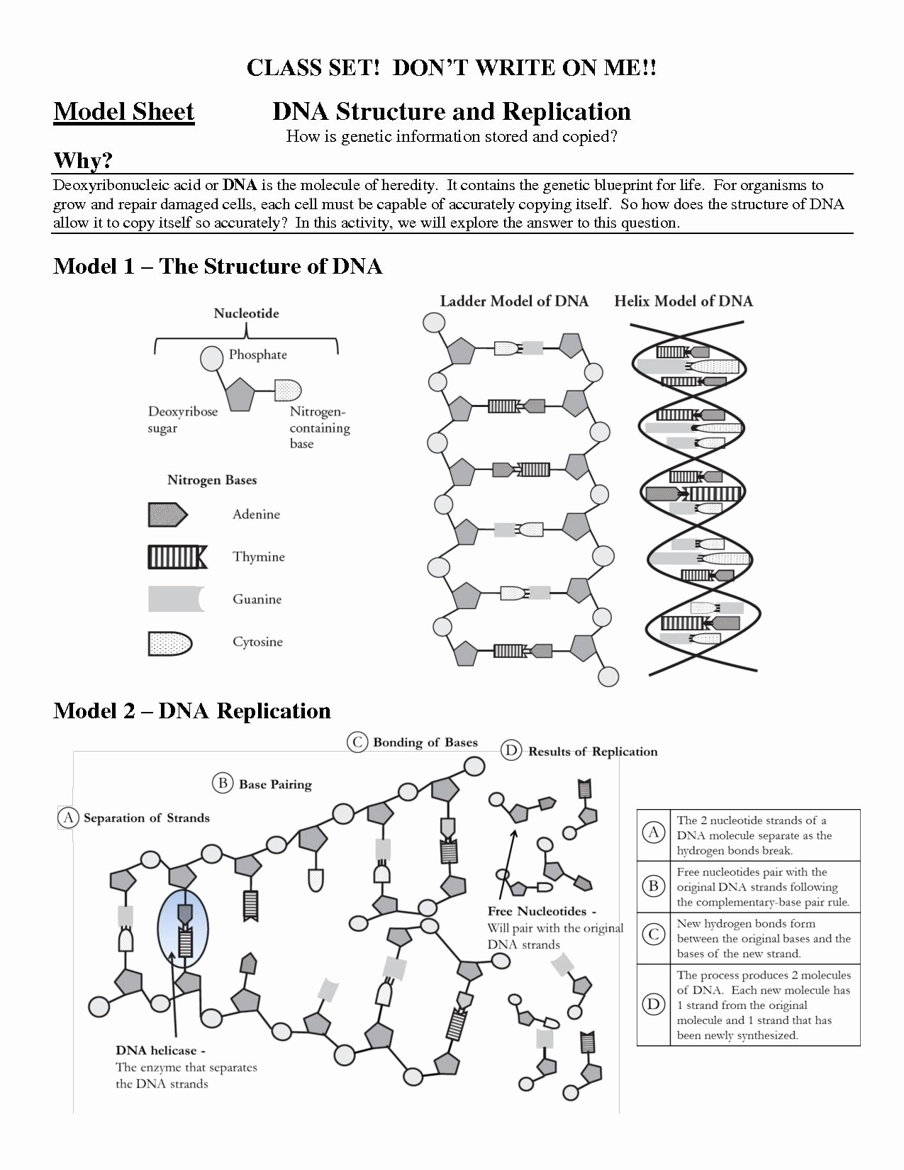 Dna Replication Worksheet Answer Key Awesome Structure Dna and Replication Worksheet Answers