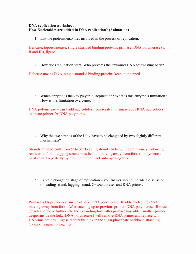 Dna Replication Worksheet Answer Key Lovely Dna Replication Worksheet – Watch the Animations and Answer