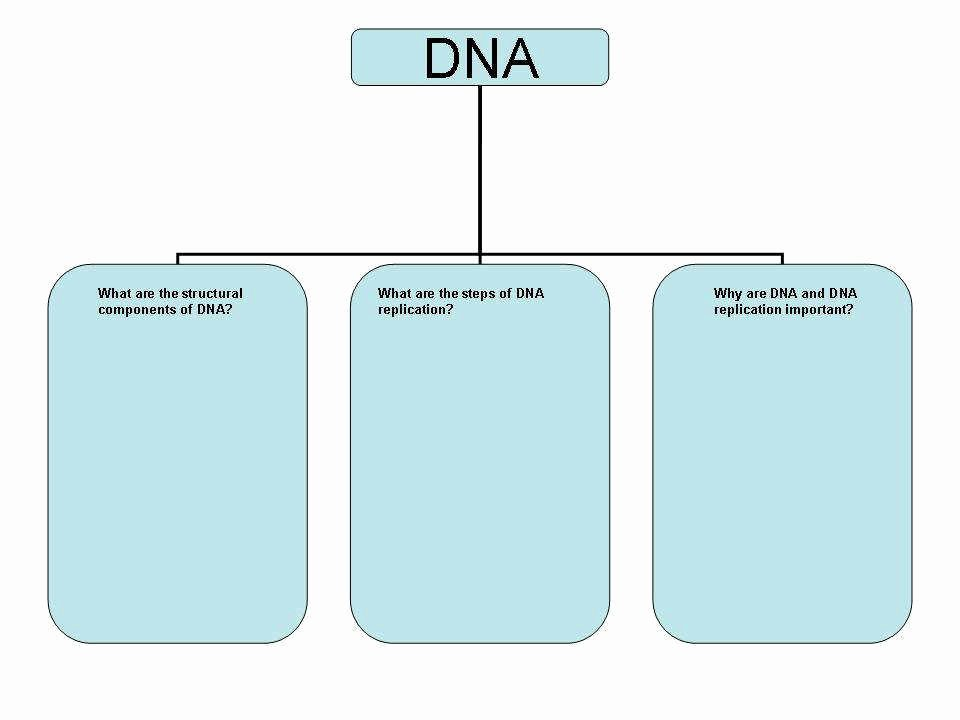 Dna Structure and Replication Worksheet Best Of Dna Worksheet