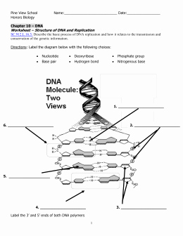 Dna Structure and Replication Worksheet Unique Studylib Essys Homework Help Flashcards Research