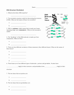 Dna Structure Worksheet Answer Best Of Dna Structure Worksheet