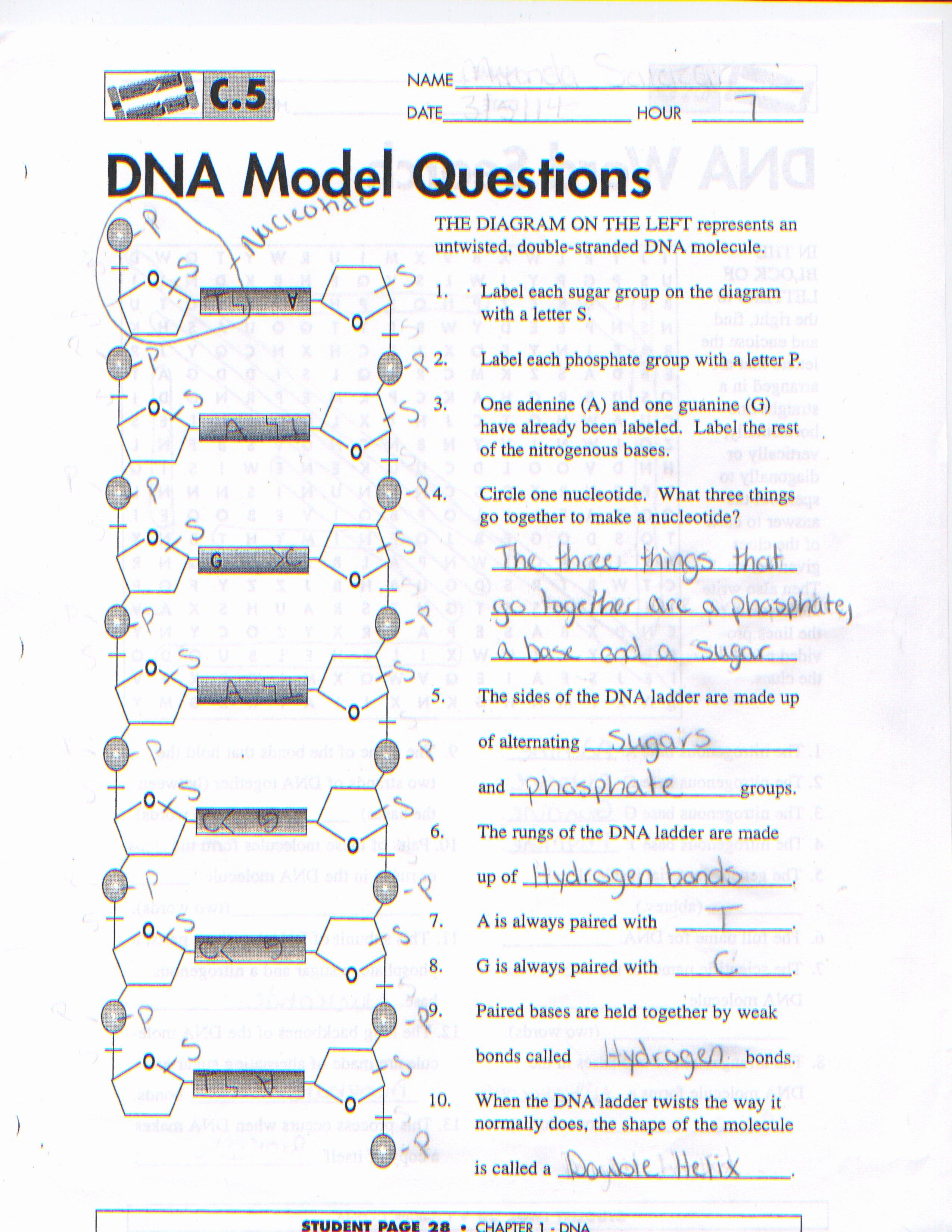 Dna Structure Worksheet Answer Elegant Worksheet Dna the Molecule Heredity Worksheet Grass