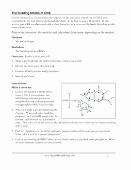 Dna Structure Worksheet Answer Inspirational Dna Structure Worksheet Identifying Nucleotides by